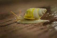 Kleine witte slakken Stock Foto's