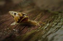 Kleine witte slakken Royalty-vrije Stock Foto's
