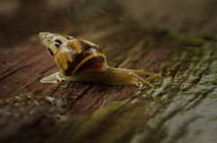 Kleine witte slakken Royalty-vrije Stock Afbeelding