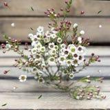 Kleine witte wasbloemen, knoppen houten achtergrond stock foto