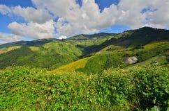 Kleine witte wilde bloemen op de heuvel van groene waaier Royalty-vrije Stock Afbeelding