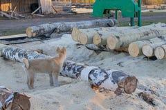 Kleine zaagmolen voor houtverwerking op plattelandsgebieden Esp en berklogboeken royalty-vrije stock afbeelding