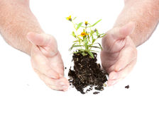 Kleine zaailingsbloem klaar voor het planten Royalty-vrije Stock Fotografie