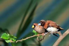 Kleine zangvogel op een tak royalty-vrije stock foto's