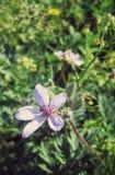 Kleine zarte Blume Stockfotografie
