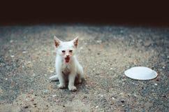 Kleine zieke kat Stock Afbeeldingen