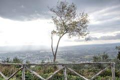 Kleine zonovergoten olijfboom die filters door de wolken bij sunse Royalty-vrije Stock Foto's