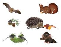 Kleine zoogdieren royalty-vrije illustratie