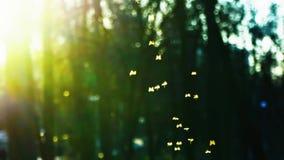 Kleine Zuckmücken fliegen in den Park in den Strahlen der untergehenden Sonne, Schwarm von den Mücken, die im Park, slowm Bewegun stock footage