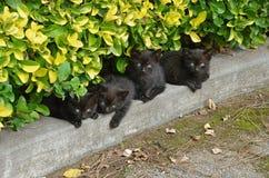 Kleine zwarte katten Royalty-vrije Stock Afbeeldingen