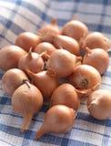 Kleine Zwiebeln auf einem Tuch Stockbild