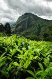 Kleinen Adams Spitze, Sri Lanka Stockbilder