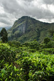 Kleinen Adams Spitze, Sri Lanka Stockfotografie