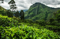 Kleinen Adams Spitze, Sri Lanka Stockfoto