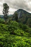 Kleinen Adams Spitze, Sri Lanka Lizenzfreie Stockbilder