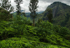Kleinen Adams Spitze, Sri Lanka Stockfotos