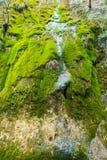 Kleiner überwucherter Wasserfall Stockfotografie