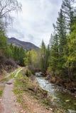 Kleiner aber st?rmischer Gebirgsfluss kleines Yaloman und die Stra?e durch den Wald in Altai, Russland stockbild
