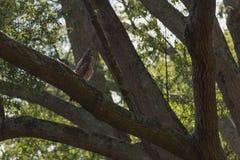 Kleiner Adler auf der Niederlassung Stockbilder