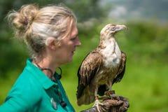 Kleiner Adler, der auf Vogellenkerhand sitzt Stockbilder