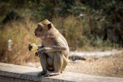 Kleiner Affe Lizenzfreie Stockbilder
