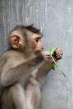 Kleiner Affe Stockbild