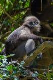 Kleiner Affe Stockfoto