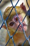 Kleiner Affe Lizenzfreie Stockfotos