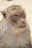 Kleiner Affe Lizenzfreies Stockfoto