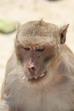 Kleiner Affe Lizenzfreie Stockfotografie