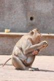 Kleiner Affe Stockbilder
