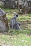 Kleiner Affe allein Stockbild