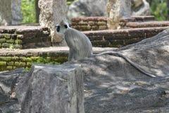 Kleiner Affe allein Lizenzfreies Stockfoto