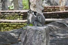 Kleiner Affe allein Lizenzfreies Stockbild