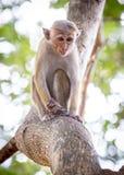 Kleiner Affe auf Baum Stockfoto