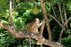 Kleiner Affe auf dem Baum Stockfotos