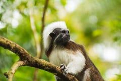 Kleiner Affe auf der Niederlassung des Baums Lizenzfreies Stockfoto