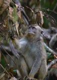 Kleiner Affe, der überrascht schaut Stockbilder
