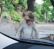 Kleiner Affe, der auf Automütze sitzt Lizenzfreies Stockfoto