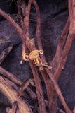 Kleiner Affe, der auf Baum klettert Stockbild