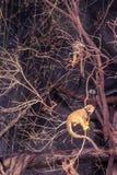 Kleiner Affe, der auf Baum klettert Lizenzfreies Stockbild