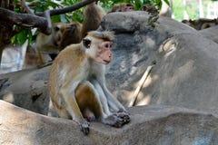 Kleiner Affe, der auf dem Felsenfoto sitzt Stockfoto