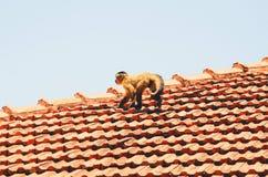 Kleiner Affe, der auf ein Dach eines Hauses geht Stockfotos