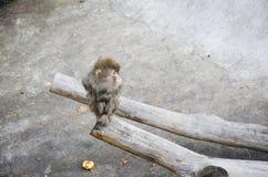 Kleiner Affe, der auf einem Baum sitzt Lizenzfreie Stockfotografie
