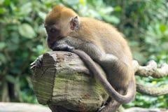 Kleiner Affe, der auf einem Baumast stillsteht Lizenzfreie Stockfotos