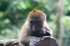 Kleiner Affe, der auf einem Baumast stillsteht Lizenzfreies Stockbild