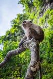 Kleiner Affe, der auf einem Baumast auf einem Affe-Strand in Thailand, in den grünen Bäumen und im blauen Himmel im Hintergrund s lizenzfreies stockfoto