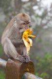 Kleiner Affe, der auf einem Pfosten sitzt Stockbilder