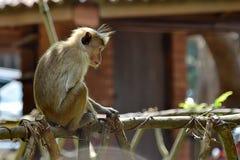 Kleiner Affe, der auf Geländer und denkendem Foto sitzt Lizenzfreies Stockbild