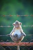 Kleiner Affe, der auf stell Zaun klettert Stockbilder